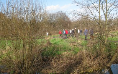 Nature Walk 1st February 2020 – Potterne Park into Moors Valley